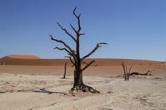 Sossusvlei Salt Pan Desert Landscape with Dead Trees, Dunes Stock Images
