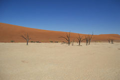 Sossusvlei Salt Pan Desert Landscape with Dead Trees, Namibia Royalty Free Stock Photography
