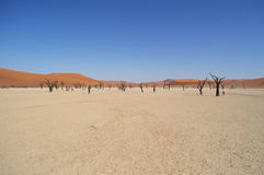 Sossusvlei Salt Pan Desert Landscape with Dead Trees and People Stock Image
