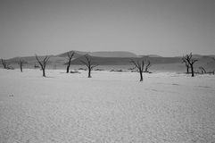 Sossusvlei Salt Pan Desert Landscape with Dead Trees and People, Stock Images