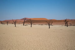 Sossusvlei Salt Pan Desert Landscape with Dead Trees and People Royalty Free Stock Photography