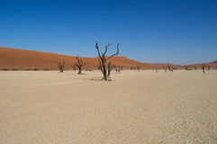 Sossusvlei Salt Pan Desert Landscape with Dead Trees and People Stock Images