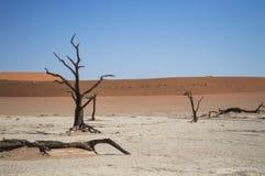 Sossusvlei Salt Pan Desert Landscape with Dead Trees and Tiny Stock Photos