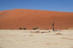 Sossusvlei salta Pan Desert Landscape med döda träd och dyn Arkivfoto