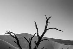 Sossusvlei salta Pan Desert Landscape med döda träd och dyn Royaltyfri Fotografi