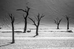 Sossusvlei salta Pan Desert Landscape med den döda träd och dyn Arkivbild