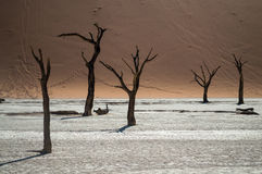 Sossusvlei salta Pan Desert Landscape med den döda träd och dyn Royaltyfri Fotografi