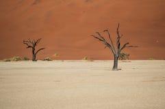 Sossusvlei salta Pan Desert Landscape med den döda träd och dyn Arkivbilder