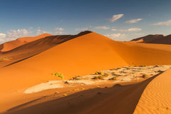 Sossusvlei sand dune in the early morning light. Namibia, Africa Royalty Free Stock Photo