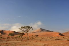 Sossusvlei sand dune national park. Sossusvlei n a very rare misty day where the red iron oxide dunes are static Stock Image