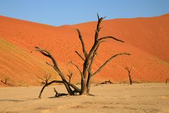 Sossusvlei sand dunes. Set deep within the dune sea of the Namib desert, Sossusvlei is actually one of a number of small evaporation pans at the end of the Stock Image