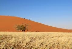 Sossusvlei sand dunes landscape in Nanib desert. Sossusvlei sand dunes landscape in the Nanib desert near Sesriem, Namibia Stock Image
