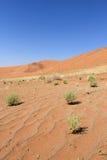 Sossusvlei sand dunes landscape in Nanib desert. Sossusvlei sand dunes landscape in the Nanib desert near Sesriem, Namibia Stock Photo
