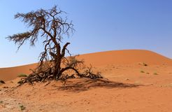 Sossusvlei sand dunes landscape in Nanib desert Stock Photo