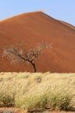 Sossusvlei sand dunes landscape in Nanib desert Stock Images
