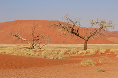 Sossusvlei sand dunes landscape in Nanib desert. Sossusvlei sand dunes landscape in the Nanib desert near Sesriem, Namibia royalty free stock photo