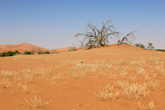 Sossusvlei sand dunes landscape in the Nanib desert near Sesriem Royalty Free Stock Photography