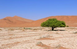 Sossusvlei sand dunes landscape in the Nanib desert near Sesriem Stock Photos