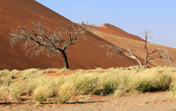 Sossusvlei sand dunes landscape in the Nanib desert near Sesriem Royalty Free Stock Photos