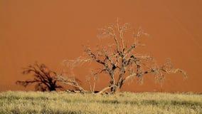 Sossusvlei Tree Stock Photo
