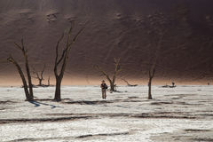 Sossusvlei - Vlei inoperante Namíbia Fotos de Stock Royalty Free