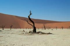 Sossusvlei Zout Pan Desert Landscape met Dode Bomen en Duinen Stock Foto's
