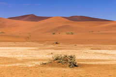 Sossusvlie Sand Dunes, Namib Desert. Sossusvlei is a salt and clay pan surrounded by high red dunes, located in the southern part of the Namib Desert, in the Stock Image