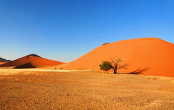 Sossuvlei Royalty Free Stock Image