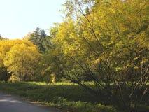 Sosta in autunno Fotografie Stock