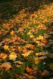 Sosta in autunno Immagine Stock