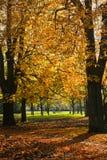 Sosta in autunno con gli alberi di castagna Fotografia Stock