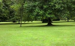 Sosta con erba verde e gli alberi Fotografia Stock