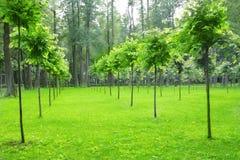 Sosta con i giovani alberi Fotografie Stock Libere da Diritti