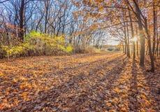 Sosta d'autunno alberi dei fogli di autunno Fotografia Stock