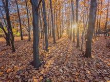 Sosta d'autunno alberi dei fogli di autunno Immagine Stock Libera da Diritti