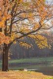 Sosta d'autunno alberi dei fogli di autunno Fotografie Stock Libere da Diritti