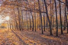 Sosta d'autunno alberi dei fogli di autunno Fotografie Stock