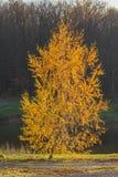 Sosta d'autunno alberi dei fogli di autunno Immagini Stock Libere da Diritti