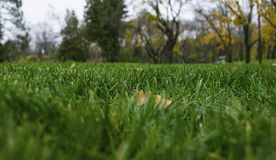 Sosta d'autunno Vista dalla terra fotografia stock libera da diritti