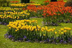 Sosta dei tulipani Fotografia Stock