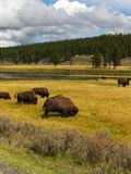 Sosta del Yellowstone Nationa Fotografie Stock Libere da Diritti