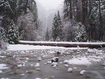 Sosta del Yosemite in scrofa. Fotografia Stock Libera da Diritti