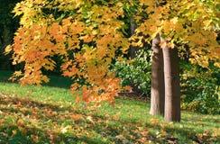 Sosta della città di autunno Fotografia Stock Libera da Diritti