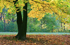 Sosta della città di autunno Fotografia Stock