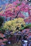 Sosta della collina di falò di autunno Immagine Stock