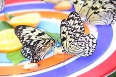 Sosta della farfalla immagine stock