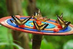 Sosta della farfalla Fotografie Stock Libere da Diritti