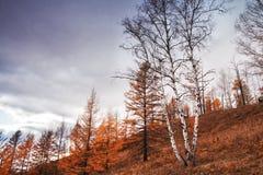 Sosta della foresta nazionale di Arxan fotografia stock libera da diritti