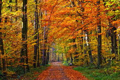 Sosta di autunno fotografia stock