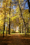 Sosta di autunno. immagini stock